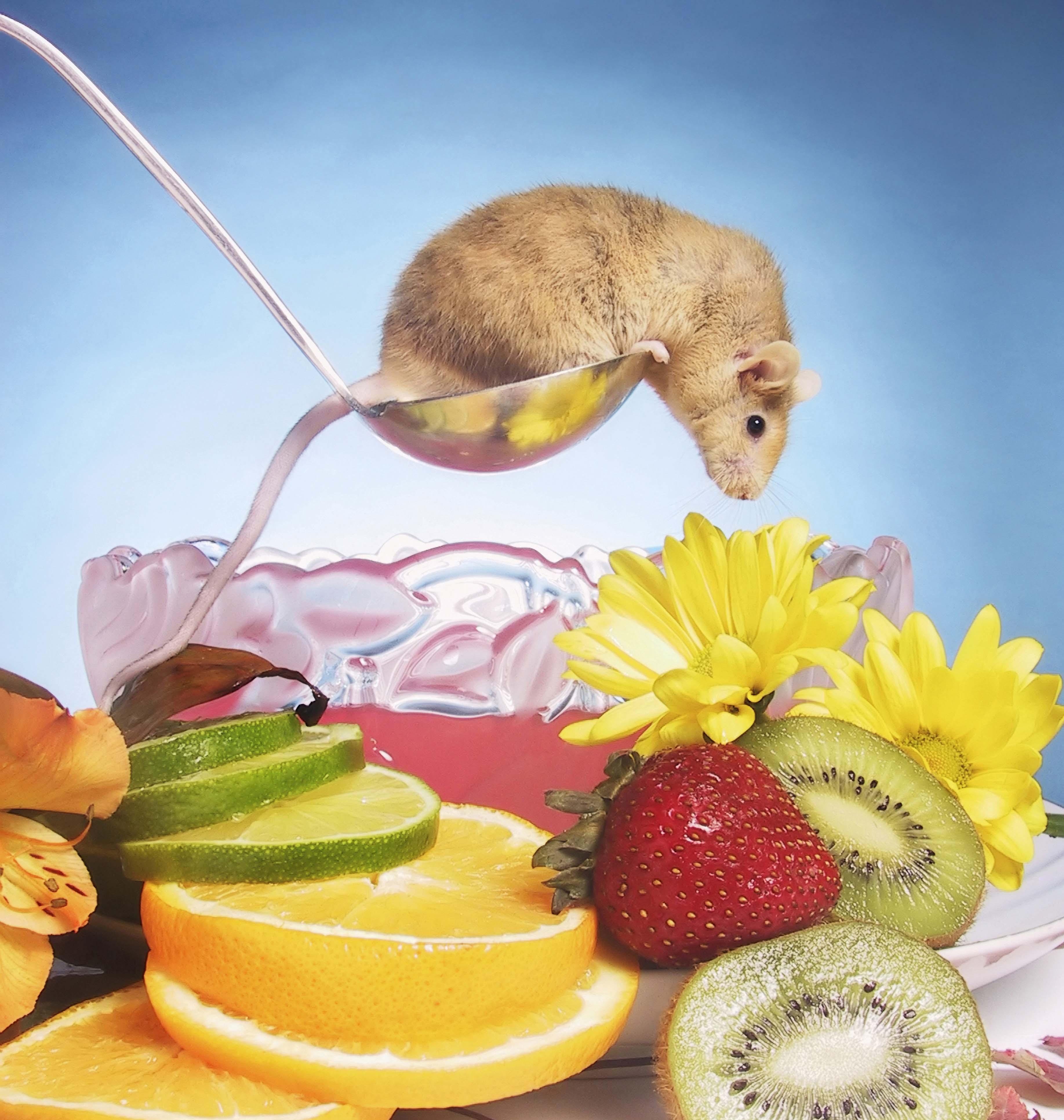 rat treats